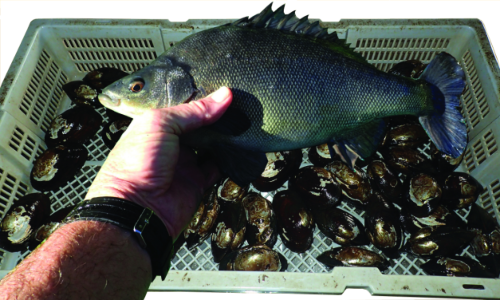 Silver Perch and Mussel Hatchery, plus Yabby Farm