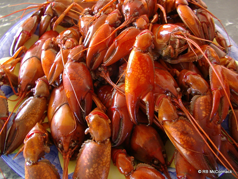 Cooked yabbies ready to eat