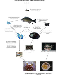 Natural Aquatic Farming